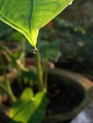 leafy by Lazulyte