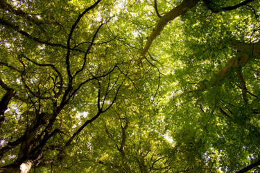 Holywells Park Ipswich 01.08.17 by tigerlily-gamgee