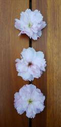 Blooms by tigerlily-gamgee