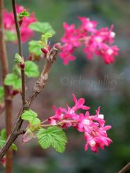 Flower 77 by jcdragonflies