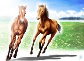 Horse by SheltieWolf