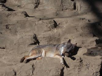 Sleeping Wolf by SheltieWolf