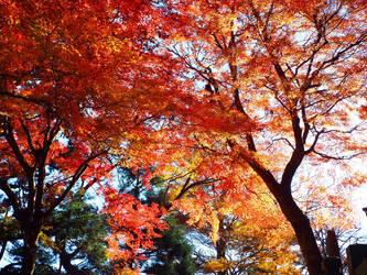 Japanese Autumn by SheltieWolf