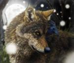 Evening Wolf by SheltieWolf