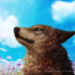 Wolf, Sky by SheltieWolf
