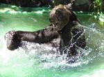Bear's Summer by SheltieWolf