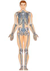 skeleton full by murattanhu