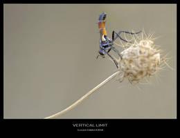 Vertical Limit by ClaudeG