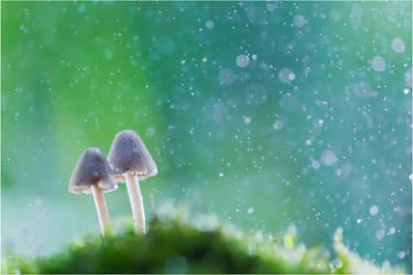 Fungi II by ClaudeG