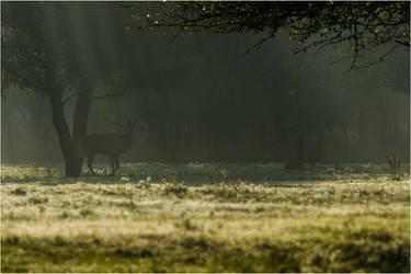 Belling Red Deer by ClaudeG