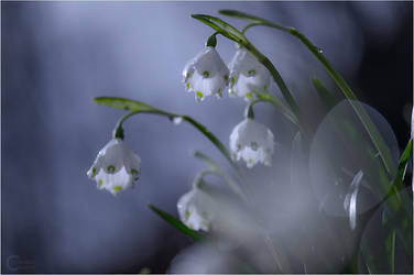 Spring Snowflake by ClaudeG