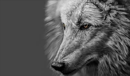 wolf v2 by SandraWhite