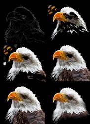 Bald eagle by SandraWhite