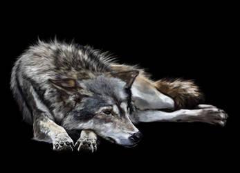 wolf v4 by SandraWhite