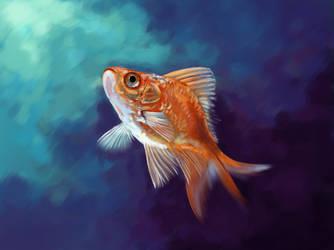 goldfish by SandraWhite