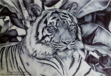 Hatch Tiger by karine-moreto