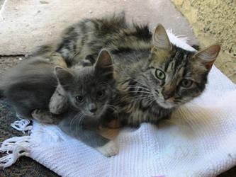 Momma, hug me :3 by isarulz
