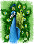 The Indian Peacock by prasadesign
