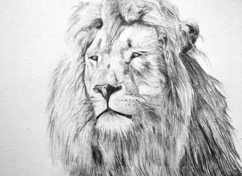A lion by Shaked20
