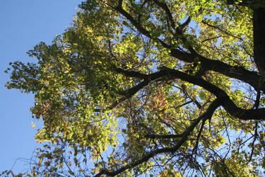 tree canopy1 rockinDdesigns stock by debsrockine
