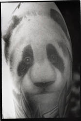 Pretty Panda by iamtheriddler