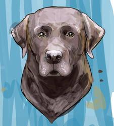 Choco Labrador by fulanodigital