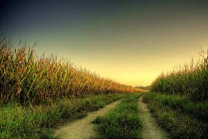 A trail through green gold by TMPhotographia