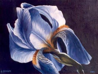 Flower by Artnes80