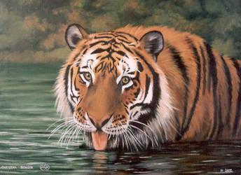 Tiger by Artnes80
