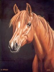 Arabian horse by Artnes80