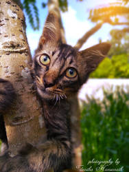 My Cat by Tilantha-hansanath