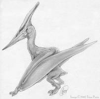 Pteranodon ingens by mirroreyesserval