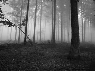 Foggy Forest by alinuredini