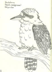 Kookaburra by VanessaHolanda