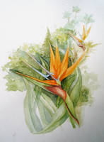 Bird of Paradise by Jerobert