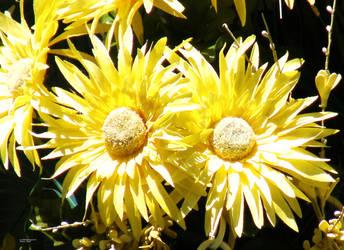 Sunny Yellow Flowers in Basket by barkingcatslc