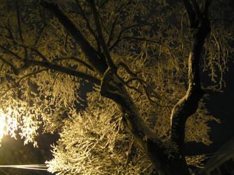 Winter's First Snowy Tree by barkingcatslc