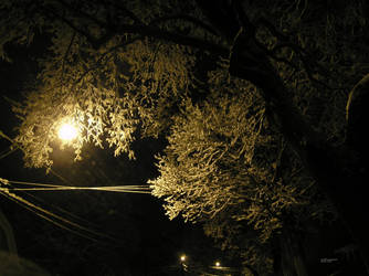 Snowy December Night by barkingcatslc
