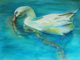 Duck Study by k8lag