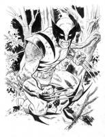Wolverine by deankotz