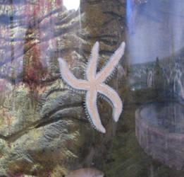 Animals 019 starfish by Dreamcatcher-stock