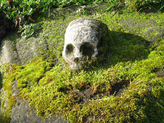 Objects 115 skull by Dreamcatcher-stock