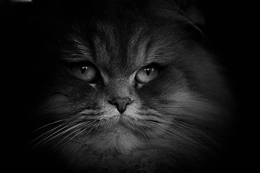 Feline look by davidsant