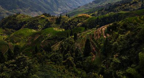 Rice Valley by davidsant