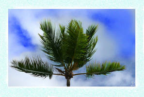PalmTree Postcard by Feelin3