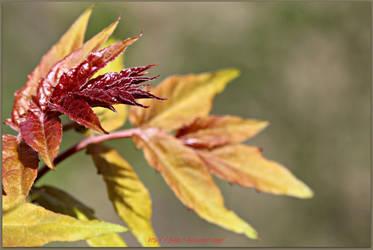 Feel a Leaf by Feelin3
