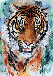 tiger3 by ElenaShved