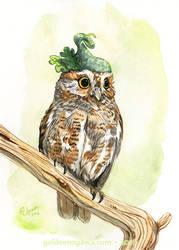 Strange Elf Owl by GoldeenHerself