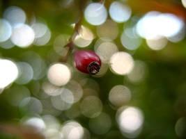 Sparcle by Saffella