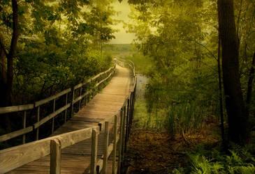 The Path by hhjjii